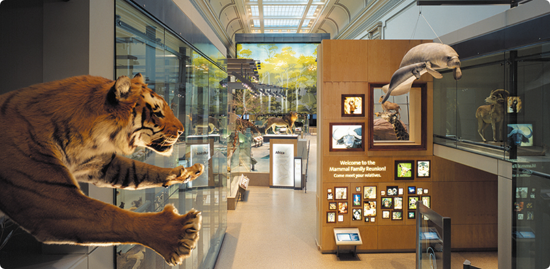Overhead view of an exhibit with mammels including a tiger, a sea lion, and a lion